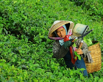 Tea Export Industry software